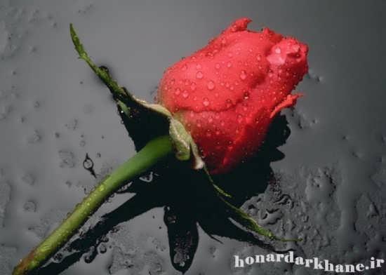 هدیه ولنتاین 92