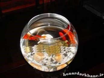 تزئین تنگ ماهی