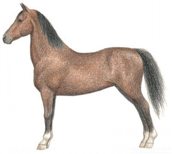 نقاشی اسب با مداد رنگی