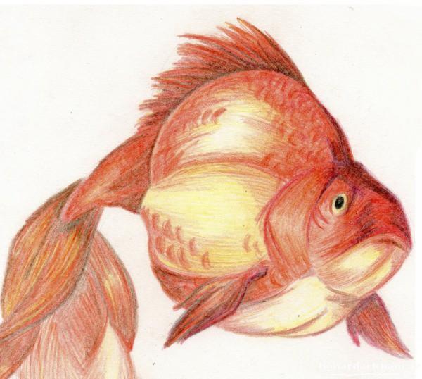نقاشی برای کودکان با مداد رنگی