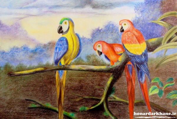 نقاشی پرنده با مداد رنگی
