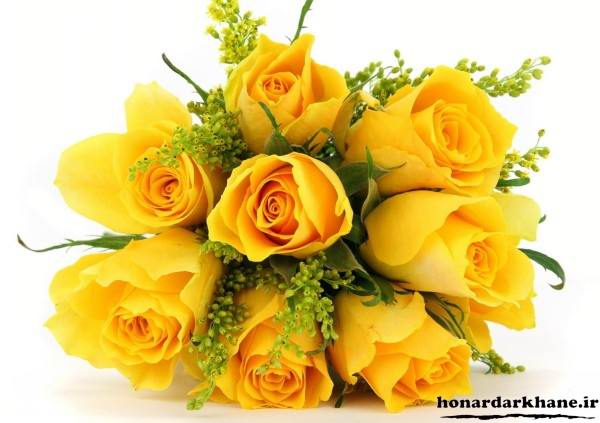 گل رز زرد