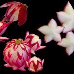 تزیین تربچه به شکل گل