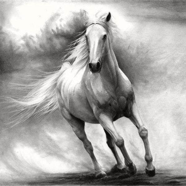 نقاشی سیاه قلم حیوانات