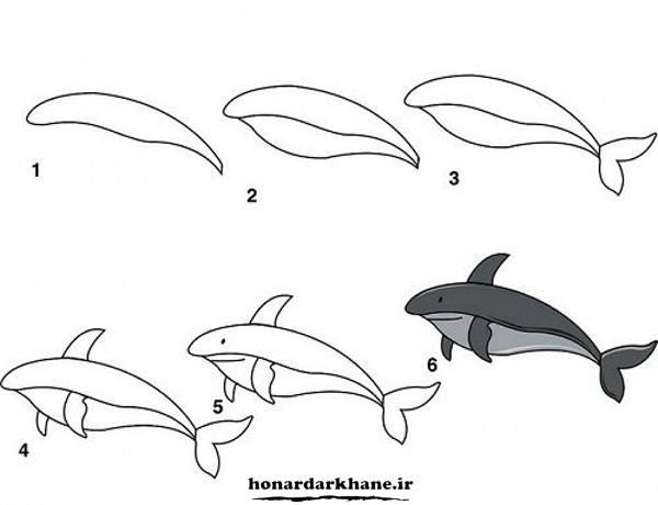 مراحل کشیدن دلفین