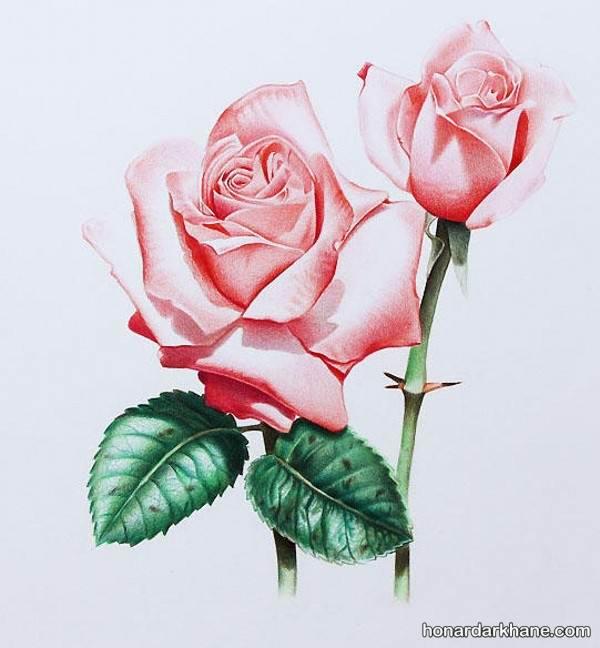مدل نقاشی گل رز