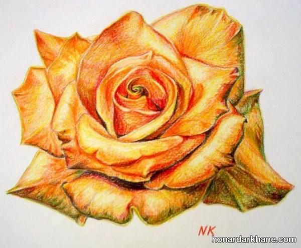 نقاشی گل رز با مداد رنگی