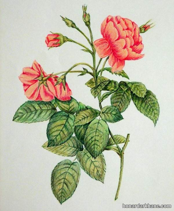 مدل نقاشی شاخه گل