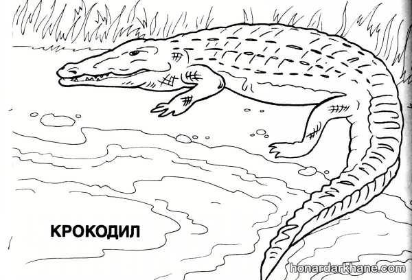 نقاشی تمساح