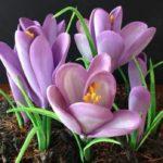 آموزش ساختن گل
