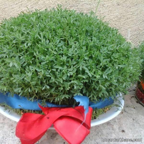 روش آماده سازی سبزه هفت سین
