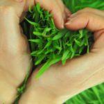 طرز تهیه سبزه عید با 3 بذر مختلف