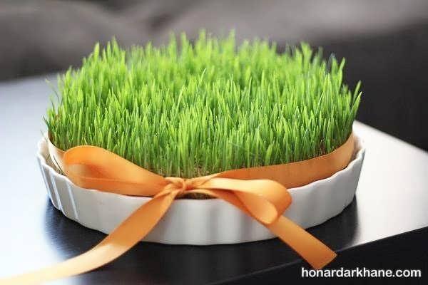 نحوه کاشت سبزه عید به 3 روش مختلف