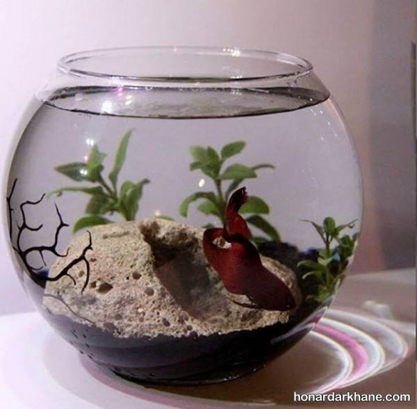انواع دیزاین زیبا و خاص تنگ ماهی هفت سین