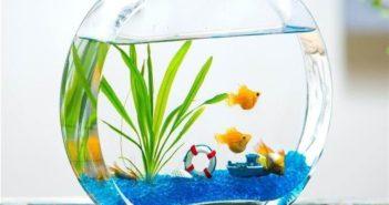 انواع مختلف تزیین تنگ ماهی هفت سین