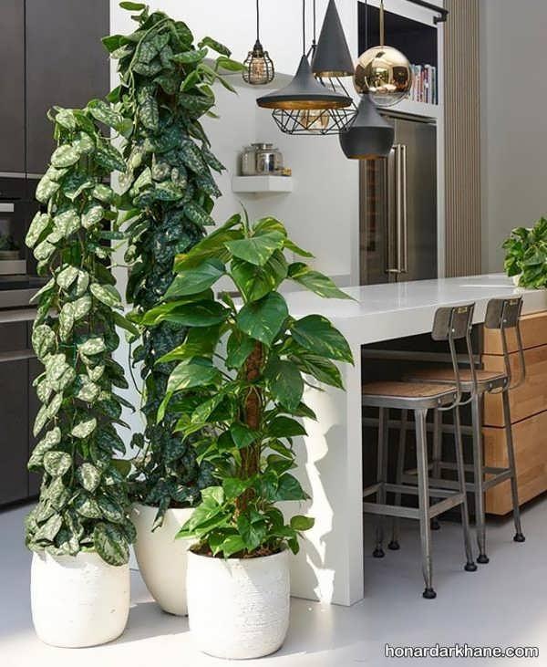 انواع دیزاین گل پتوس با سبک های خاص