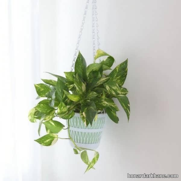 انواع دیزاین جالب و جدید گل پتوس