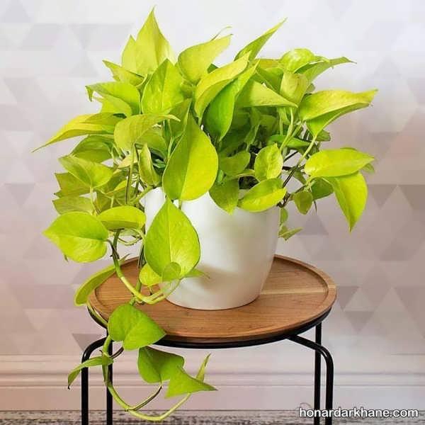 انواع تزیین جالب و جدید گل پتوس