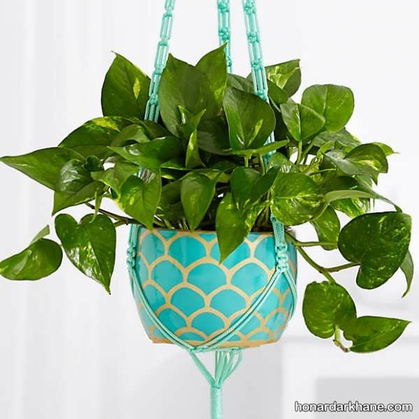 مدل های جالب طراحی گل پتوس